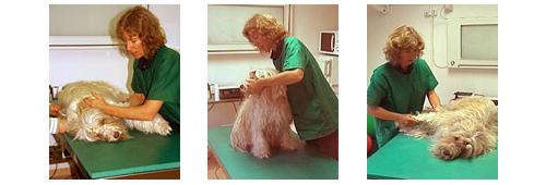 Therapieangebote Passive Bewegungstherapie